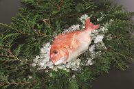 愛媛県産養殖真鯛フィレ2枚(お頭付き冷凍)