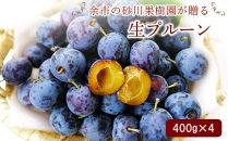 余市の砂川果樹園が贈る、生プルーン400g×4パック