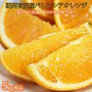 秀品 希少な国産バレンシアオレンジ5kg