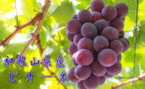 【秋の美味】フルーツ王国 和歌山のピオーネ 約2kg