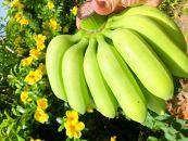 ★2021年発送★沖永良部産!完全無農薬島バナナ3キロ