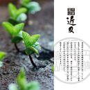 先行受付!丹波篠山産の黒枝豆(さや)500g×3袋