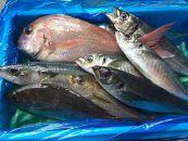 旬の鮮魚セット 2.5㎏