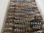 山口県宇部産活き車海老(450g)