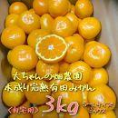 【自宅用】大ちゃんの畑農園木成り完熟有田みかん3kg(サイズミックス)