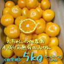 【自宅用】大ちゃんの畑農園木成り完熟有田みかん5kg(サイズミックス)