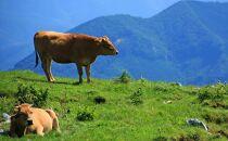 土佐和牛A5特選ヒレステーキ150g×2枚セット 牛肉