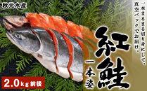 HH015 12月から順次発送!紅鮭一本姿(2.0kg前後)<秋元水産>