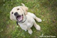 【ポイント交換専用】盲導犬訓練支援寄付②「行きたい場所に安心して行ける社会に…」