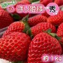 あま~い!まりひめ苺1kg 『和歌山ブランド苺』 約250g×4パック 【秀品】 ギフトにも!