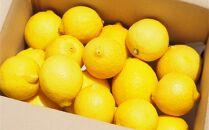 【20箱限定】皮まで美味しい無農薬レモン 家庭用2㎏