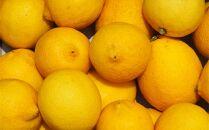 【20箱限定】皮まで美味しい無農薬レモン 家庭用1.7㎏