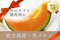 【早期受付】毎年大好評!宮古島冬メロン(2L×2玉)贈答用冬のギフト