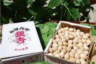 奥能登産銀杏(殻付き)中(size:L~2L)1.5kg