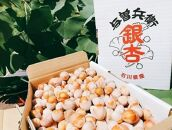 奥能登産銀杏(むき身)(size:L~2L)800g