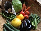 【定期便】旬の有機野菜8種類詰め合わせ ファミリーサイズ(2021年5月発送開始)