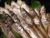 京丹後の地元魚屋がお届けする干し物セット