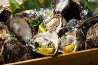 ヨコタ礁天然岩牡蠣(生食用)大12個