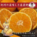 【むじのし付】有田みかん約5キロ(秀品)・湯浅醤油900ミリ3本
