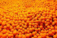 【瀬戸内・因島産】季節の柑橘セット約5kg