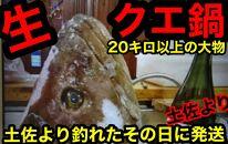 【幻の天然クエ生直送】生クエ鍋用800g
