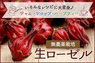 【品切れ】【期間限定】宮古島産 生ローゼル(ハイビスカスティー)果実 4キロ