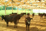 都城産宮崎牛ローススライス(A5ランク)