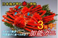 加能ガニ中(ずわいがに)3尾(ボイル)【漁獲次第発送】