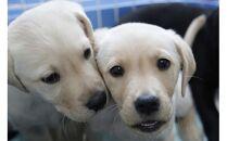 【使い道:介助犬にならない犬たちの活躍育成事業限定】「シンシアの丘」への寄附金とする! 10,000円