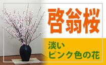 ♪お正月に咲く桜♪山形の啓翁桜(けいおうざくら)