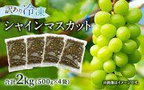 訳あり【冷凍】かの蜂シャインマスカット2kg(500g×4袋)国産マスカット
