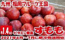 九州・福岡フルーツ王国八女から直送!すもも約1.4kg
