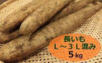 【粘る粘る】長いも L~3Lサイズ混み 5kg