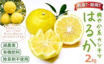 ※受付終了※「はるか」爽やか系柑橘(春のみかん)約2kg