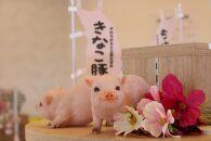 都城産「きなこ豚」とんかつセット