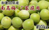 【先行予約】【和歌山名産】南高梅約5kg(サイズ混合)・ご家庭用選別