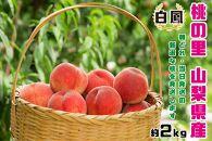 【2021年発送】山梨県産完熟桃 白鳳系 約2kg(4〜8玉)