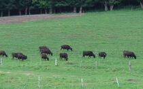 【A4/A5ランク黒毛和牛】びらとり和牛100%ハンバーグ180g×7枚