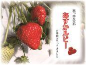 明日香村産いちご「あすかルビー」(受付・お届けは12月~)