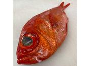 駿河湾金目鯛一匹約1kg刺身用煮つけ用処理済み