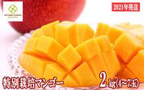 【2021年発送】特別栽培アップルマンゴー2kg
