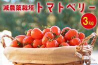 【減農薬栽培】トマトベリー3kg