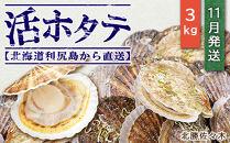 活ホタテ3㎏!~2021年11月発送~北海道利尻島から直送!【北勝佐々木】