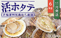 活ホタテ6㎏!~2021年11月発送~北海道利尻島から直送!【北勝佐々木】