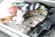 定置網朝とれ鮮魚詰め合わせ
