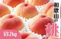 ☆先行予約☆和歌山の桃5玉~8玉入り(約2kg)【かつらぎグルメ市場】【2021年6月下旬以降発送】