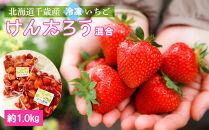 北海道千歳産冷凍いちごけんたろう混合約1.0kg