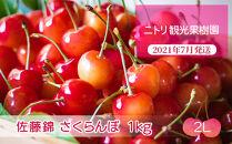 フルーツ王国余市産「佐藤錦」【2Lサイズ】1kg【ニトリ観光果樹園】
