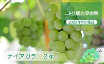 フルーツ王国余市産「ナイアガラ」2kg【ニトリ観光果樹園】
