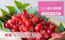 フルーツ王国余市産「南陽]2Lサイズ1kg【ニトリ観光果樹園】